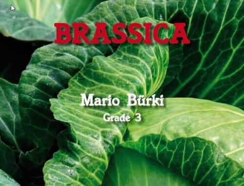 Uraufführung von BRASSICA